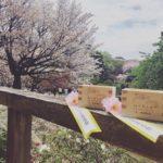 2017年 桜を見る会へ