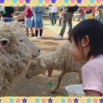 羊さーん❤️ &【お知らせ 】