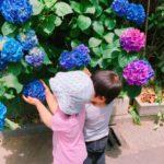 鮮やか紫陽花と✨一時預かり保育✨
