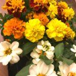 🌼母の日と花言葉🌼